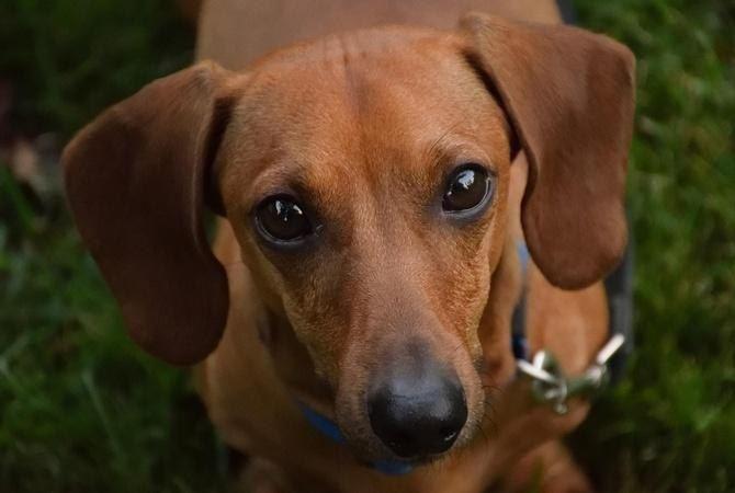 Киевлянина приговорили к 1 году тюрьмы за убийство собаки
